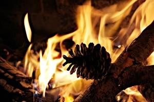 grillholz oder grillkohle